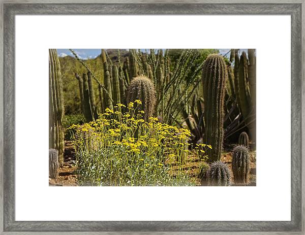 The Song Of The Sonoran Desert Framed Print