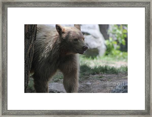 The Spirit Bear Framed Print