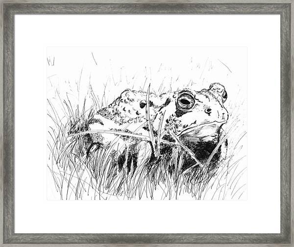 The Stalwart Old Toad Framed Print