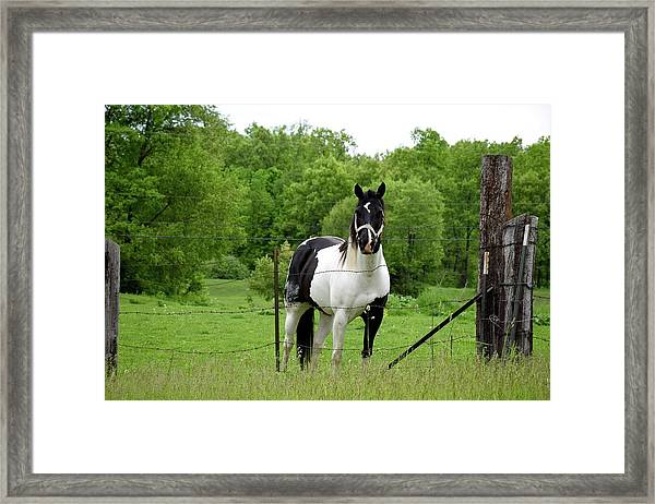 The Strong Horse Framed Print