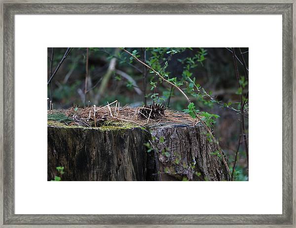 The Stump Framed Print