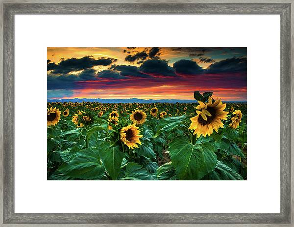 The Summer Winds Framed Print