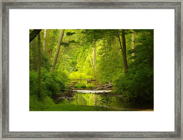 The Swamp Framed Print