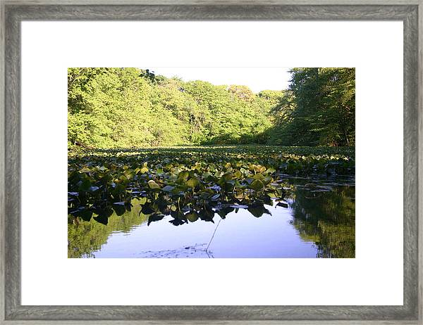 The Swamp Framed Print by Dennis Curry