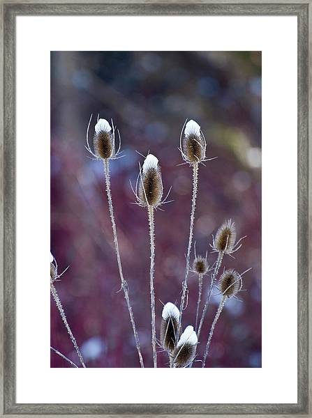 The Tall Hats Framed Print