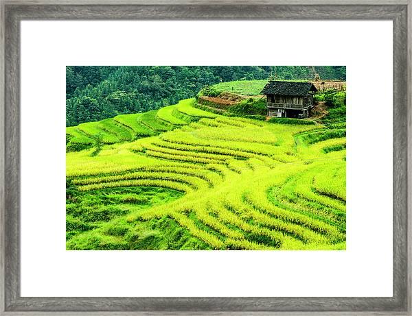 The Terraced Fields Scenery In Autumn Framed Print