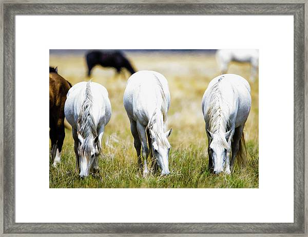 The Three Amigos Grazing Framed Print