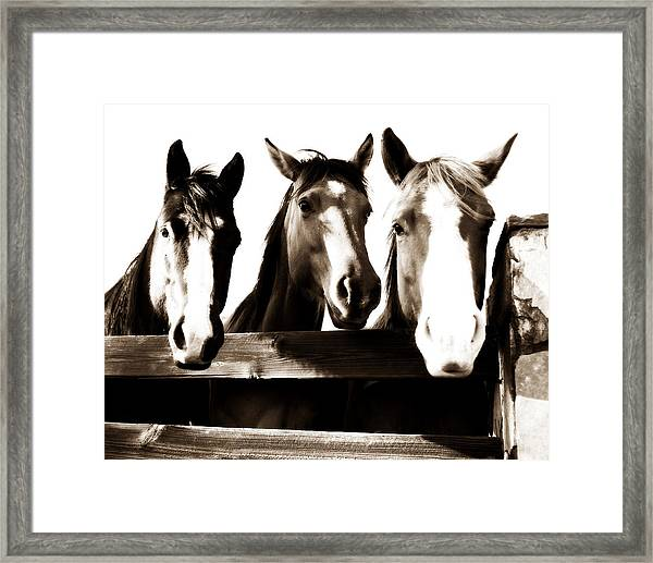 The Three Amigos In Sepia Framed Print by Michelle Shockley