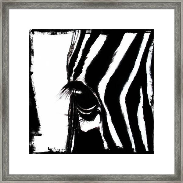The Three Musketeers - Zebra Framed Print