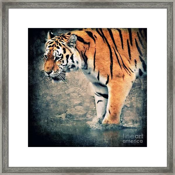 The Tiger Framed Print