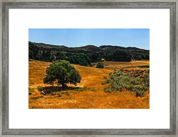 Framed Print featuring the photograph The Tree by Break The Silhouette