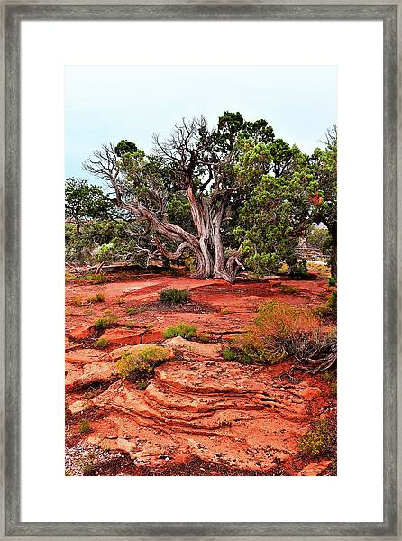 The Tree That Knows All Framed Print