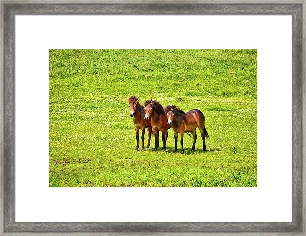 The Trio 1 Framed Print