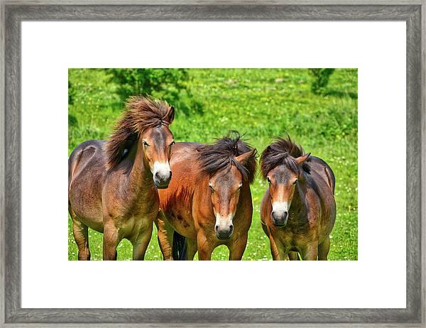 The Trio 2 Framed Print