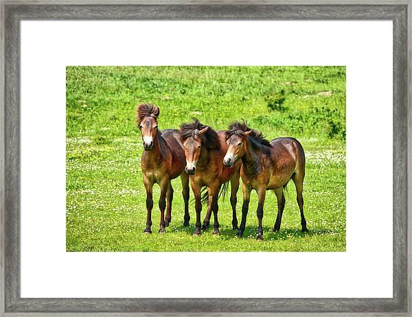 The Trio 3 Framed Print