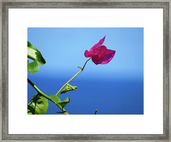 The Tropical Bloom Framed Print