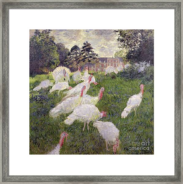 The Turkeys At The Chateau De Rottembourg Framed Print