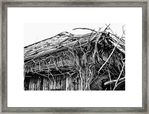 The Vines Awaken Framed Print