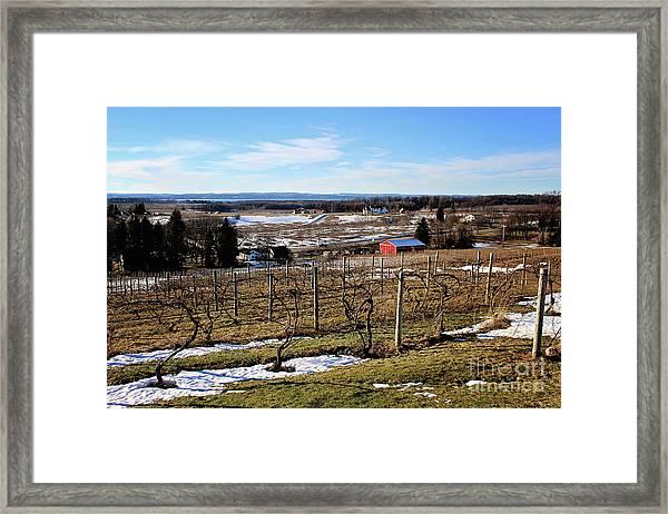 The Vineyard On Old Mission Framed Print