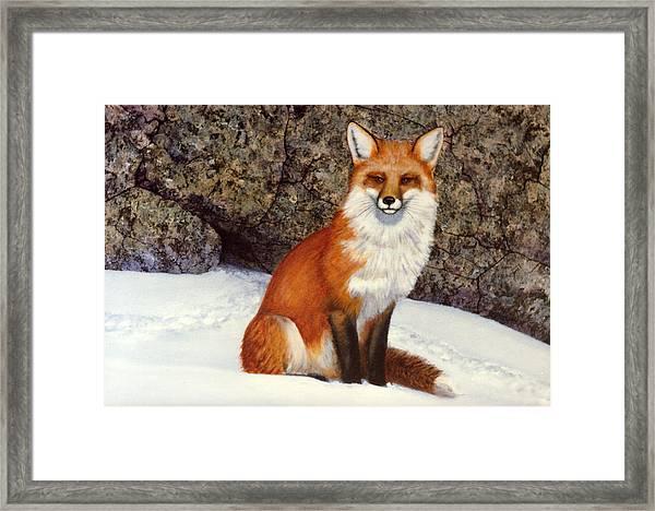 The Wait Red Fox Framed Print