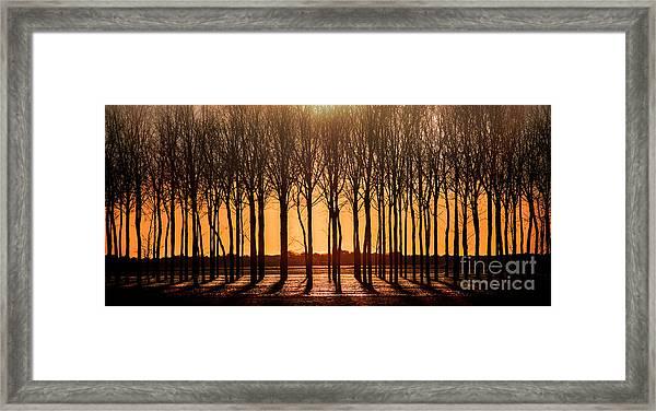 The Walnut Grove Framed Print