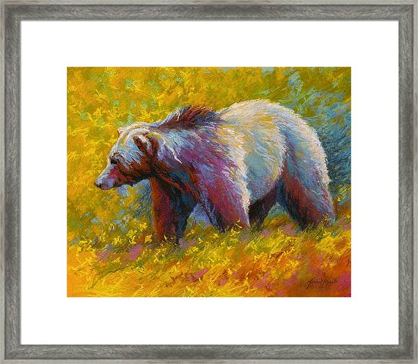 The Wandering One - Grizzly Bear Framed Print