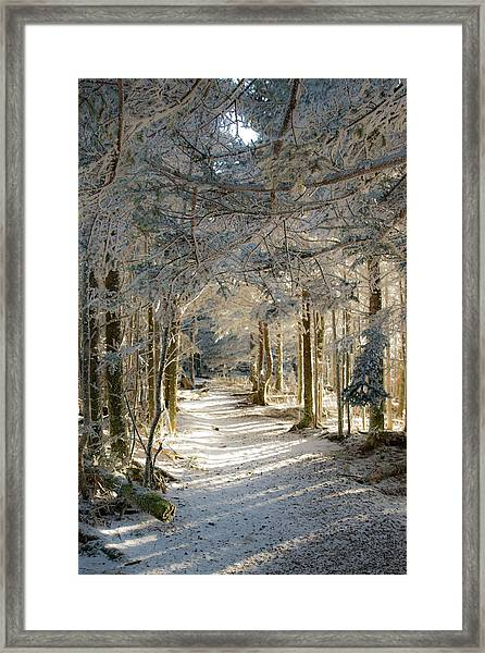 The Warmth Framed Print by Jim Neal