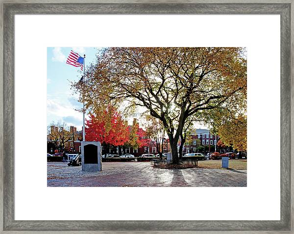 The Washington Elm Framed Print