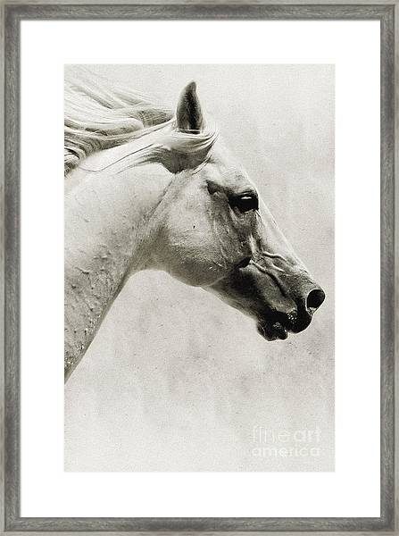 The White Horse IIi - Art Print Framed Print