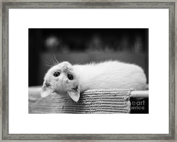 The White Kitten Framed Print