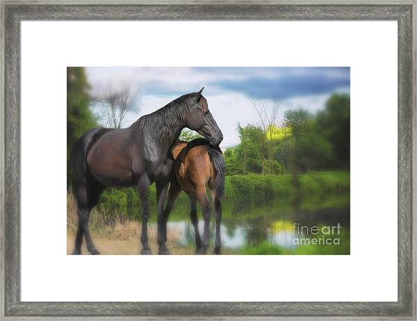 The Wild Horses Of La Chura Trail Framed Print