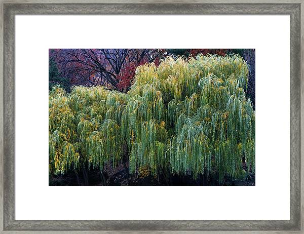 Framed Print featuring the photograph The Willows Of Central Park by Lorraine Devon Wilke
