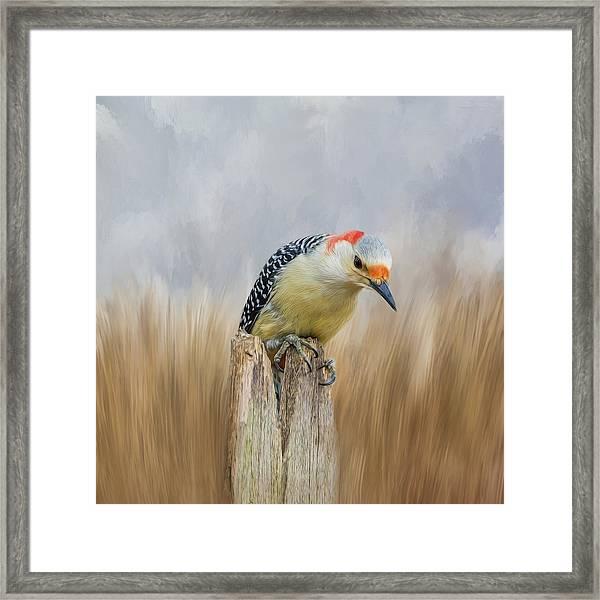 The Woodpecker Framed Print