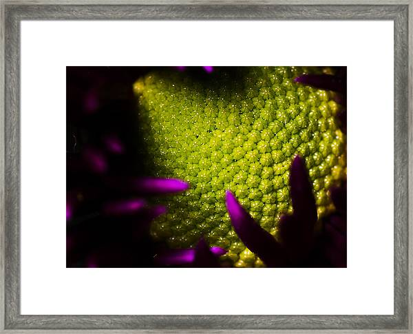 The World Within Framed Print