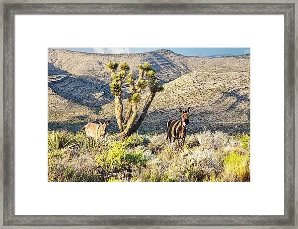 The Zebra Burro Framed Print
