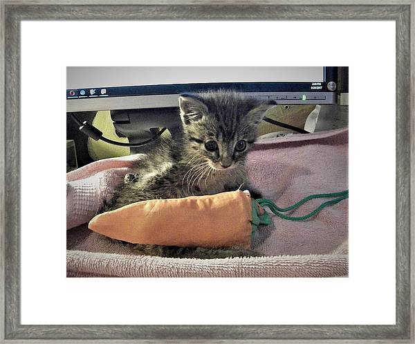 There's A Cat On My Desk Framed Print
