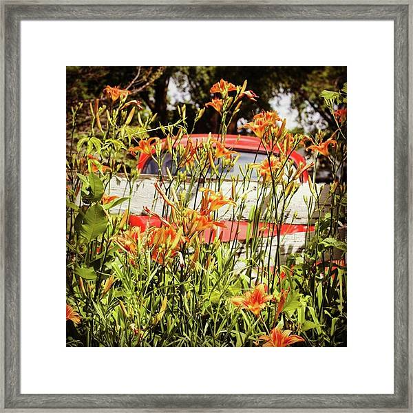There's An Orange Bug In The Orange Framed Print