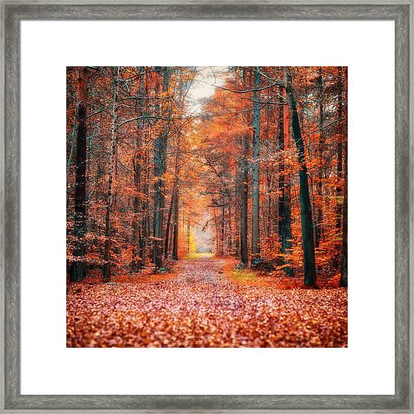 Thetford Forest Framed Print