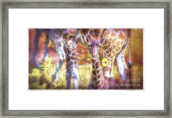 The Whimsical Giraffe  Framed Print