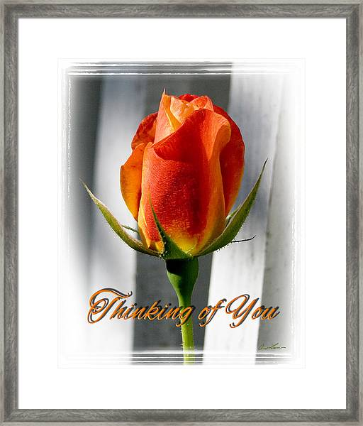 Thinking Of You, Rose Framed Print