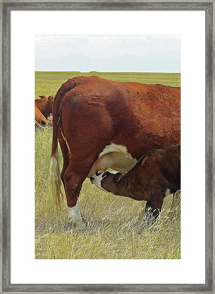 Thirst Quencher Framed Print