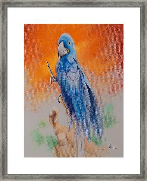 This Bird Had Flown Framed Print