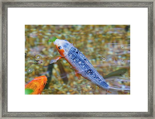 This Is Mine Fish Framed Print