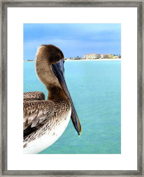 This Is My Town - Pelican At Clearwater Beach Florida  Framed Print
