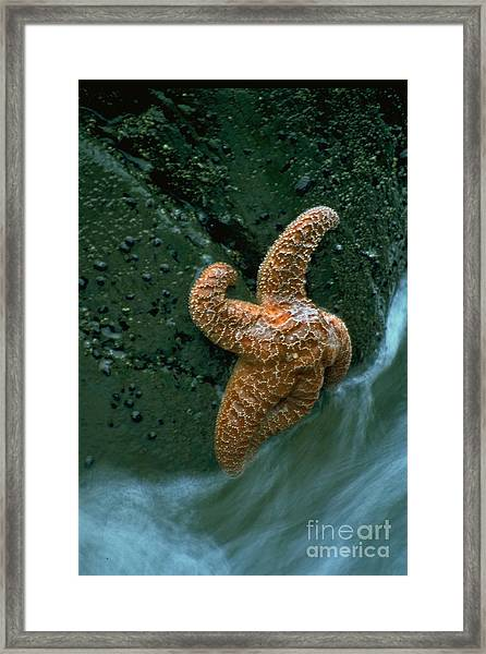 This Starfish Has A Good Grip Framed Print