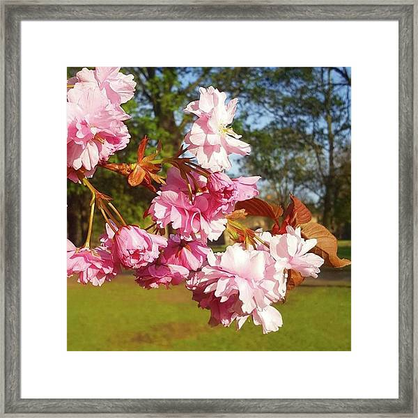 This Sun Has Really Brought Out The Framed Print by Dante Harker