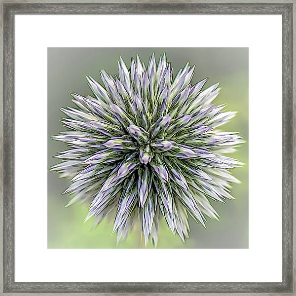 Thistle II Framed Print