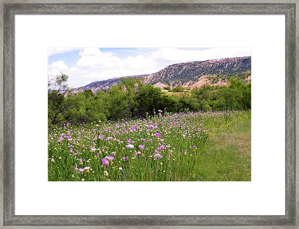 Thistles In The Canyon Framed Print