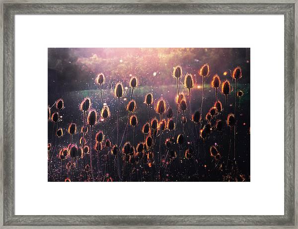 Thistles Framed Print