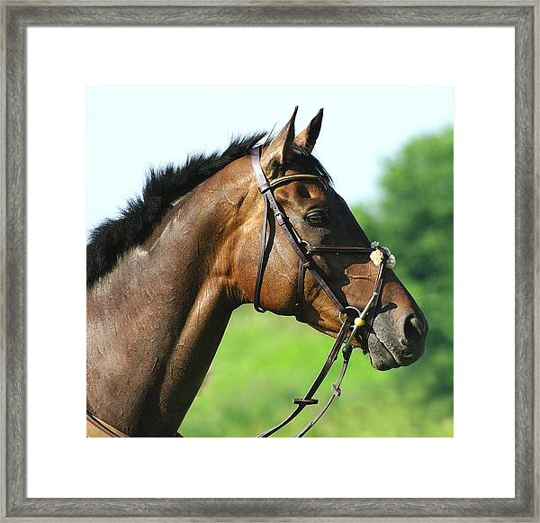 Thoroughbred Framed Print